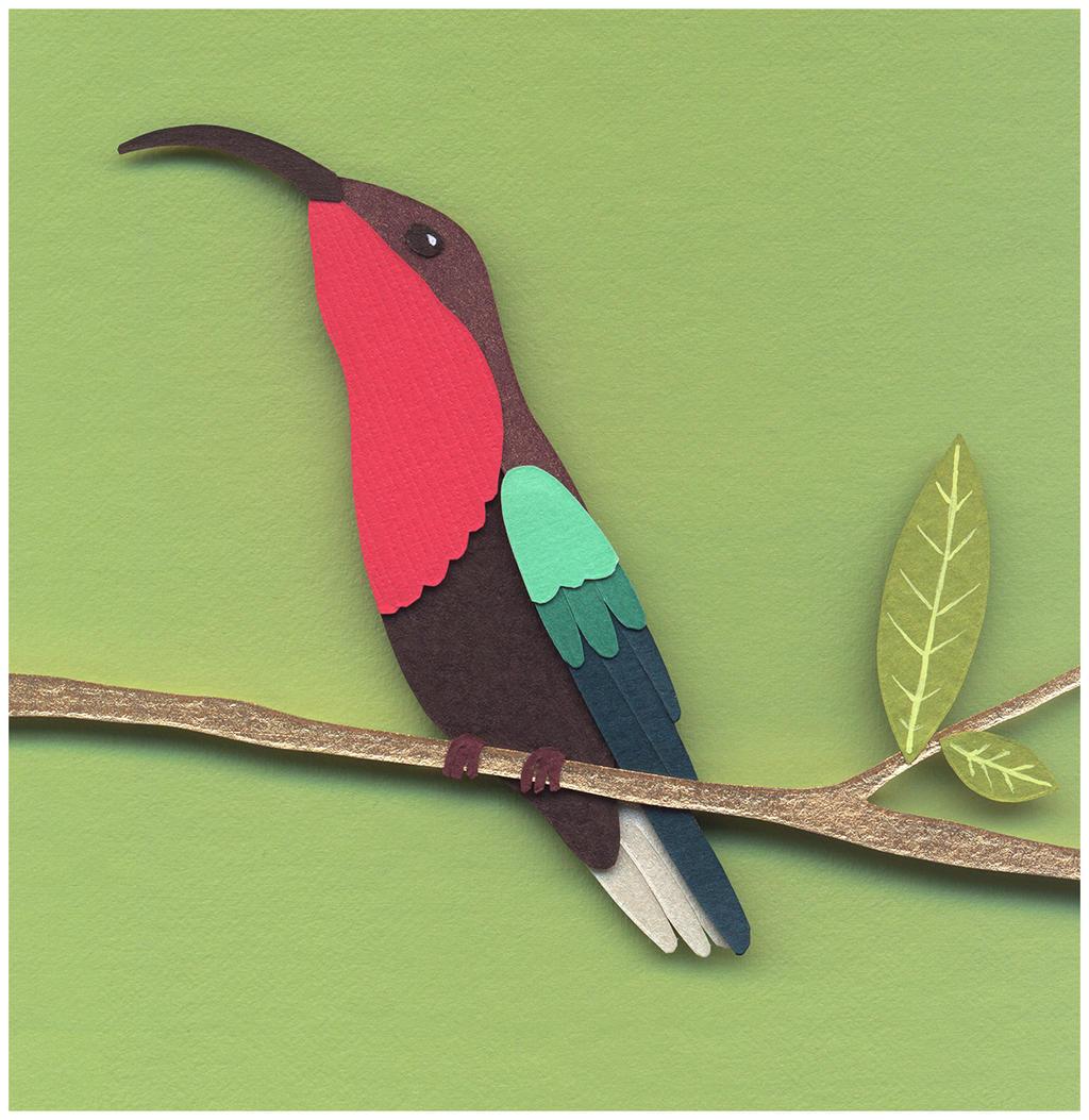 Pink-Throated Carib by renton1313