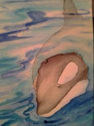 Killerwhale by Haileyjo13
