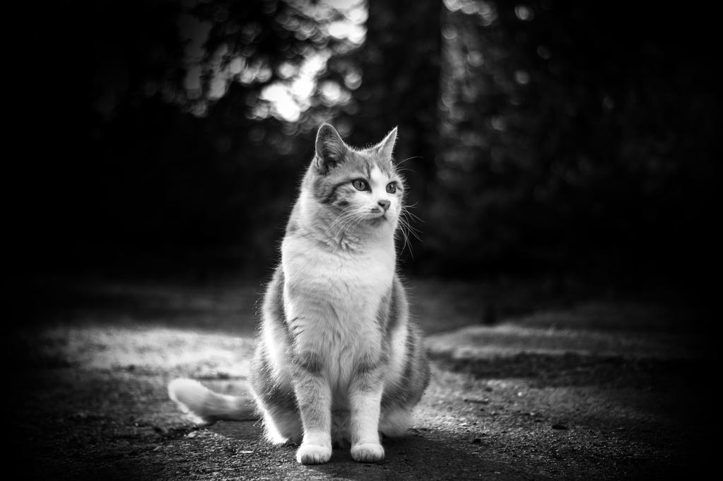 cat in black and white by murriwurri