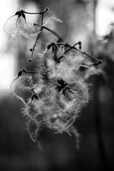 A dream in black and white