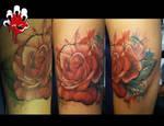 rosey daisy