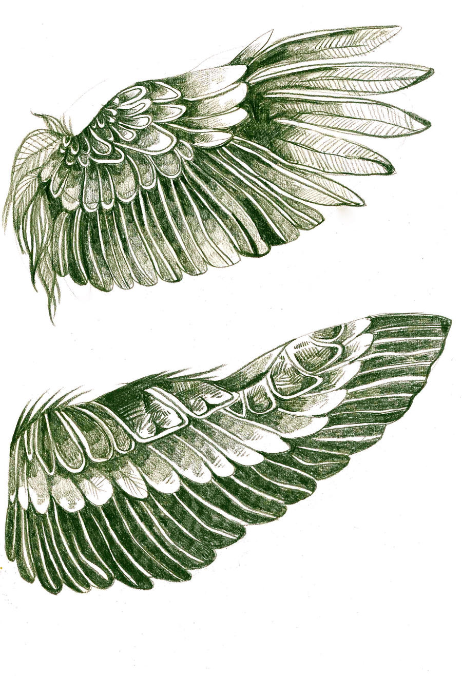 Wing Studies by ClaraBacou