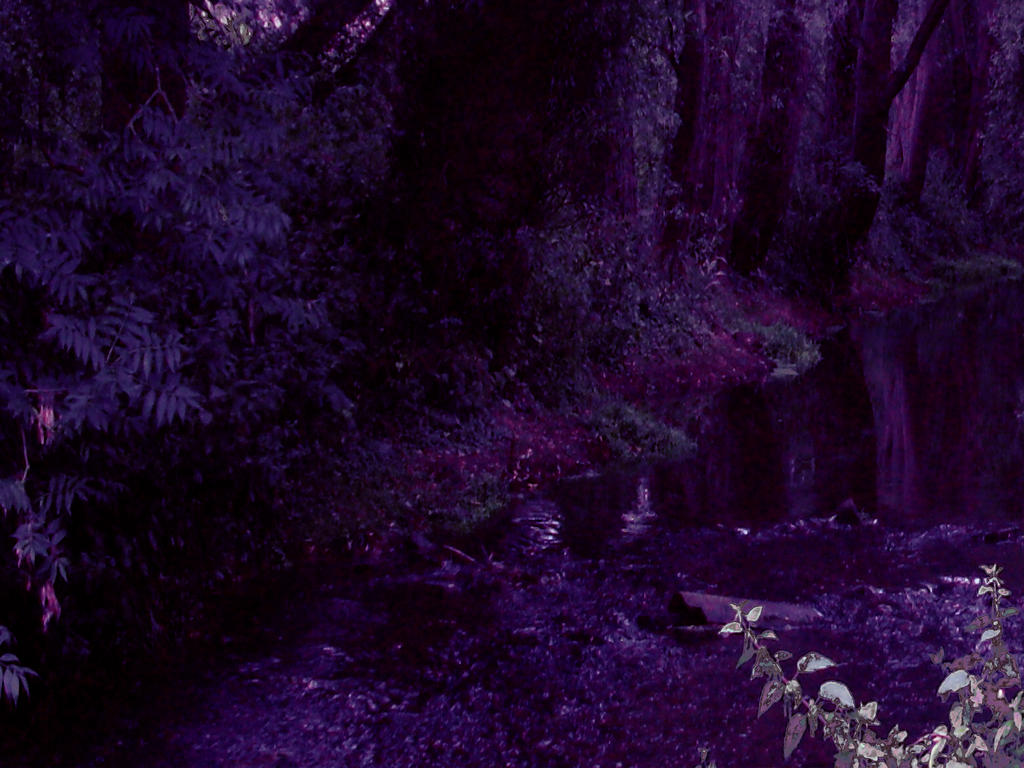 Lost in the unreachable woods by numbersinthedream on deviantart - The hideout in the woods an artists dream ...