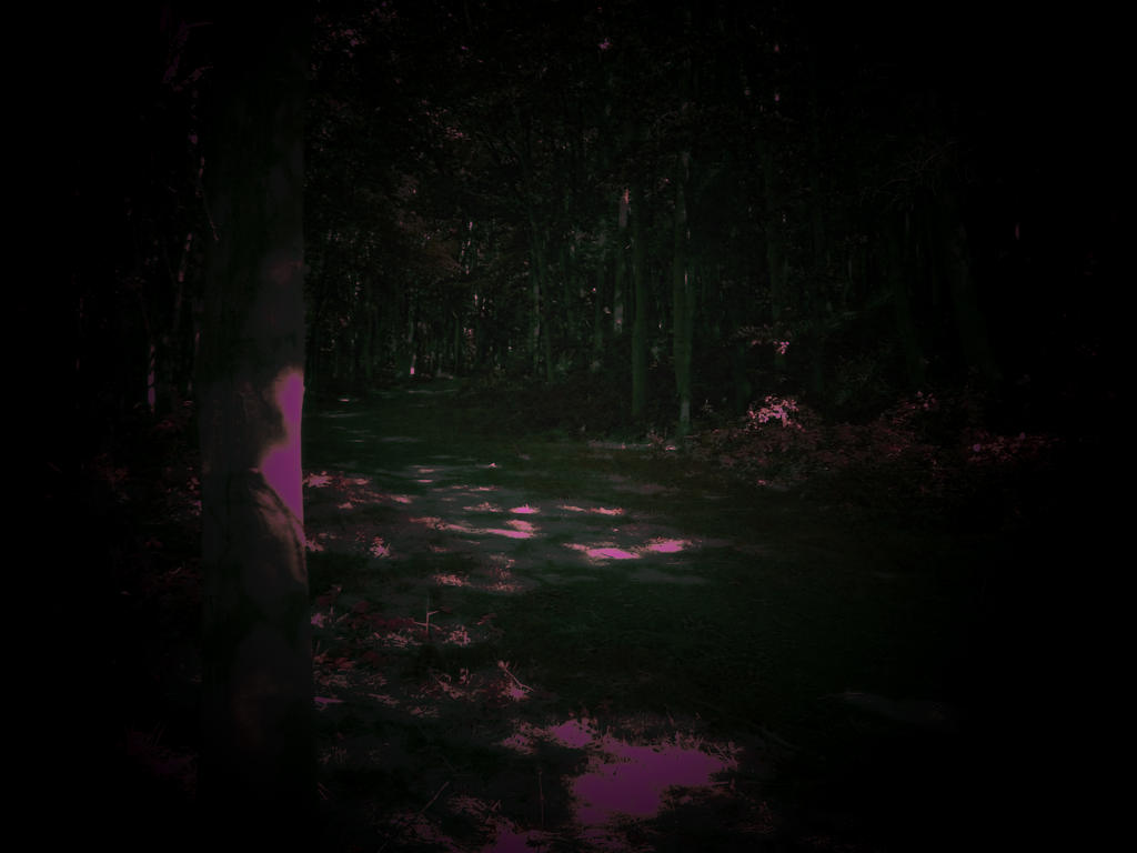 Heaven in the dark woods by NumbersInTheDream