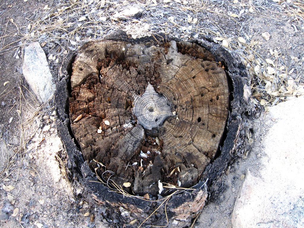 Tree Stump 1 by DeviousRose