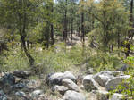 Rocky Forest 1