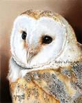 'Barn Owl' - Realism