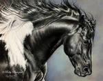 Quarter horse paint stallion