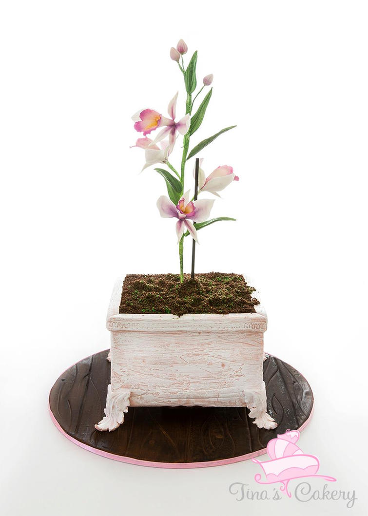 Potted Sugar orchid flower cake! by Igasm