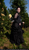 Victorian Roses Stock VII