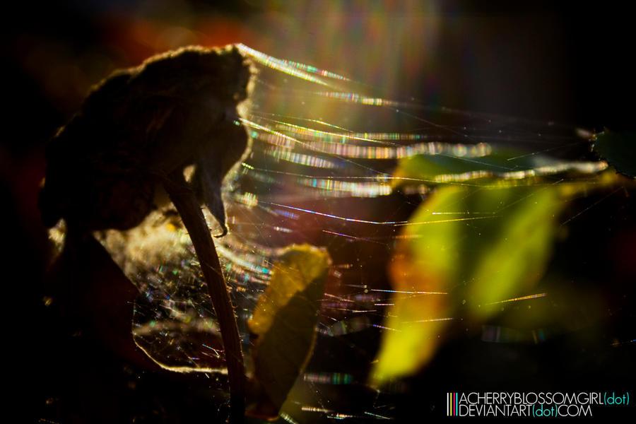 A thousand rainbows by aCherryBlossomGirl