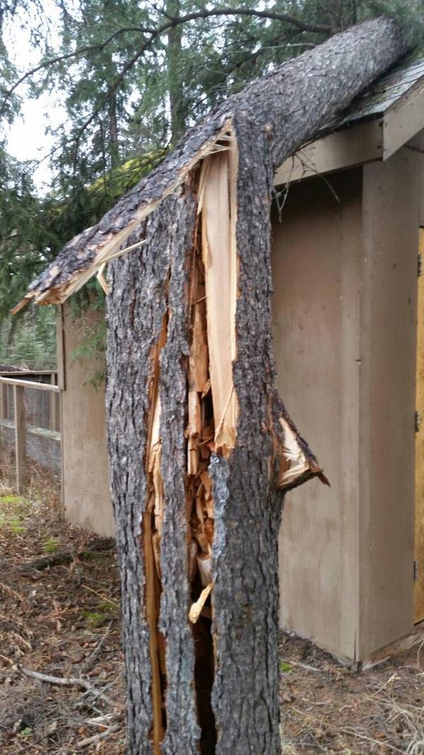 broken tree  by VampireDeidara