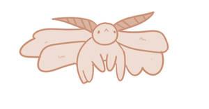 poodle moth boi