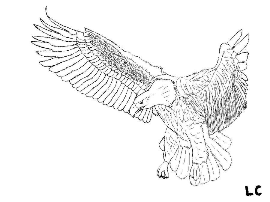 Line Art Eagle : Ms paint flying bald eagle lineart by zeecaptein on