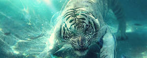 Underwater Tiger Tag by eugenio1