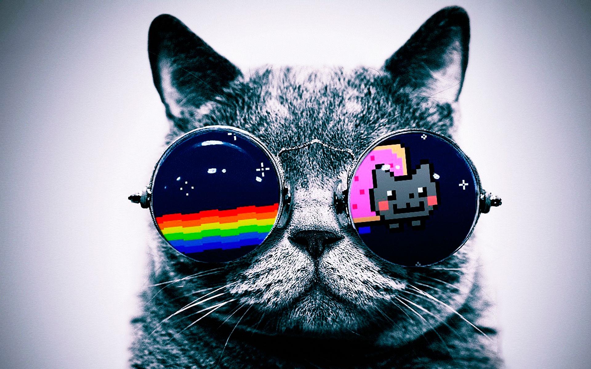 rainbow cat wallpapers - photo #32