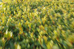 Motion Blur Hedge - for print