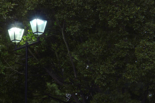 Street Lights in Tree - print