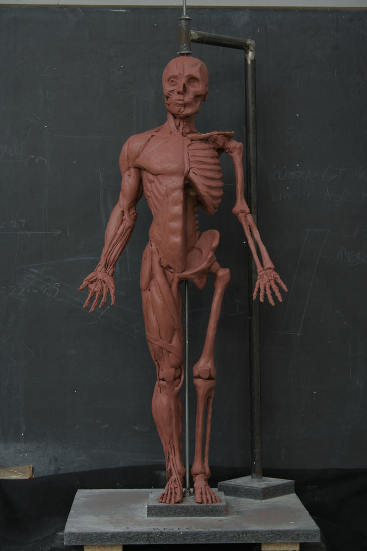 Ecorchet Sculpture - Human Anatomy 1 by RBGuerra on DeviantArt