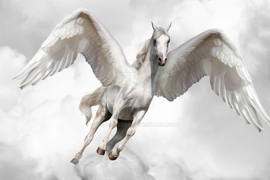 Freedom has Wings