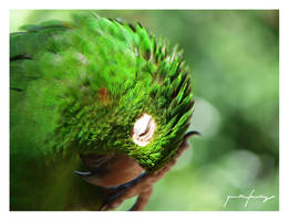 Parrot by quantumfeeling