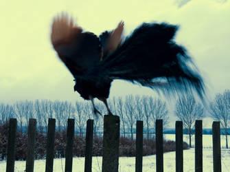 fly away by SchlafundAtemlos