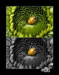 Ladybug Trap