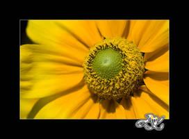 Yellow Satellite by minainerz