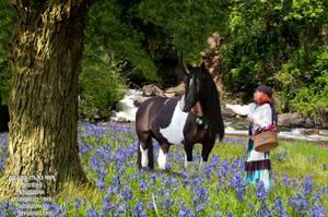 Gypsy Vanner Unicorn by OH-GOD-ITS-MY-MOM