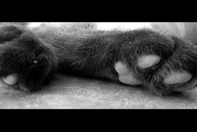 paws by mandy7