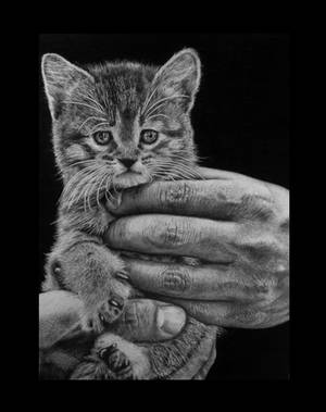 Hyperrealism. Big paws little paws by keithmore2000