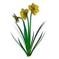 Daffodils 1 by TexelGirl-Stock