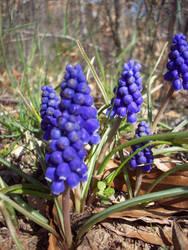 Spring Flowers 17