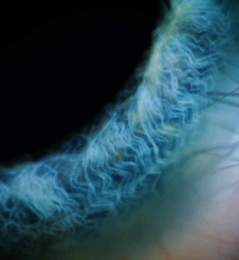 Eyes III by Ghostsk8ter