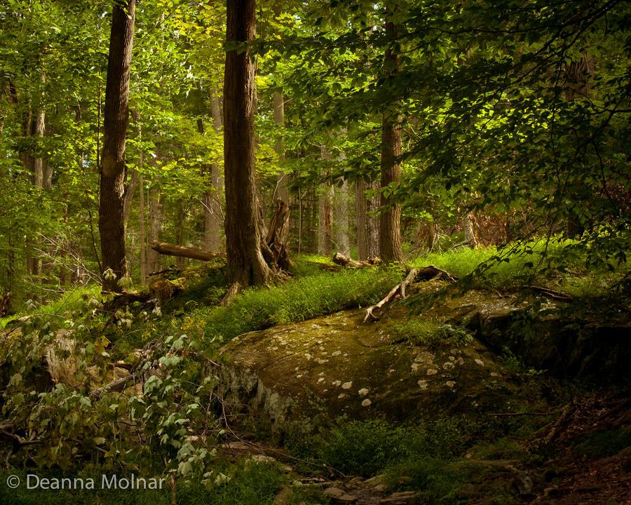Serene by Gilraen-Taralom