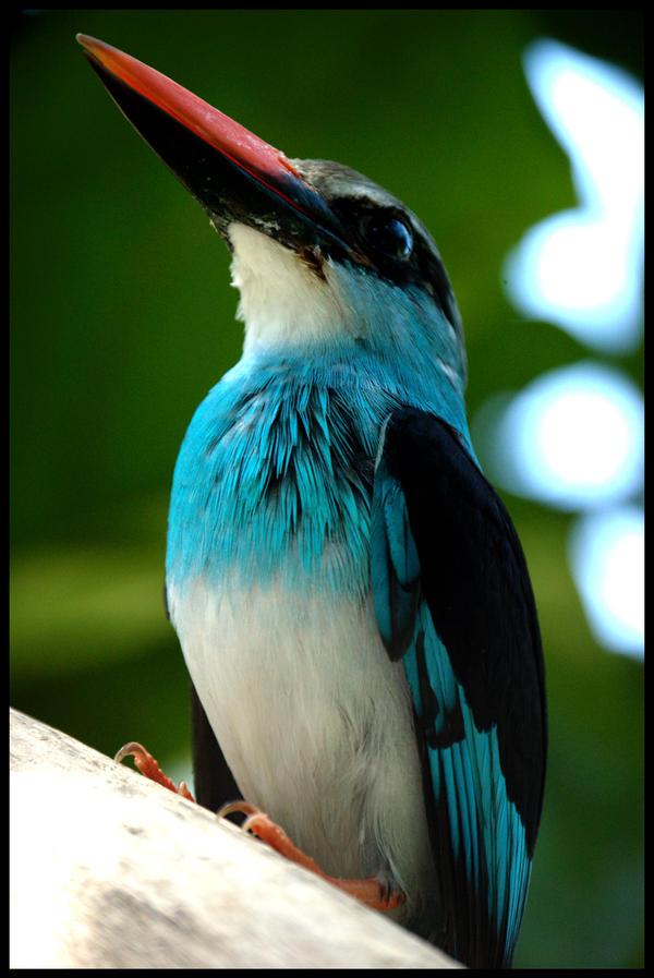 Bird-Close3 by ElementalCoco