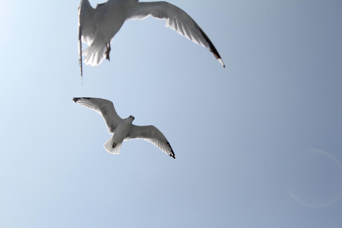 THE SEAGULLS IN FLIGHT by darthbriboy