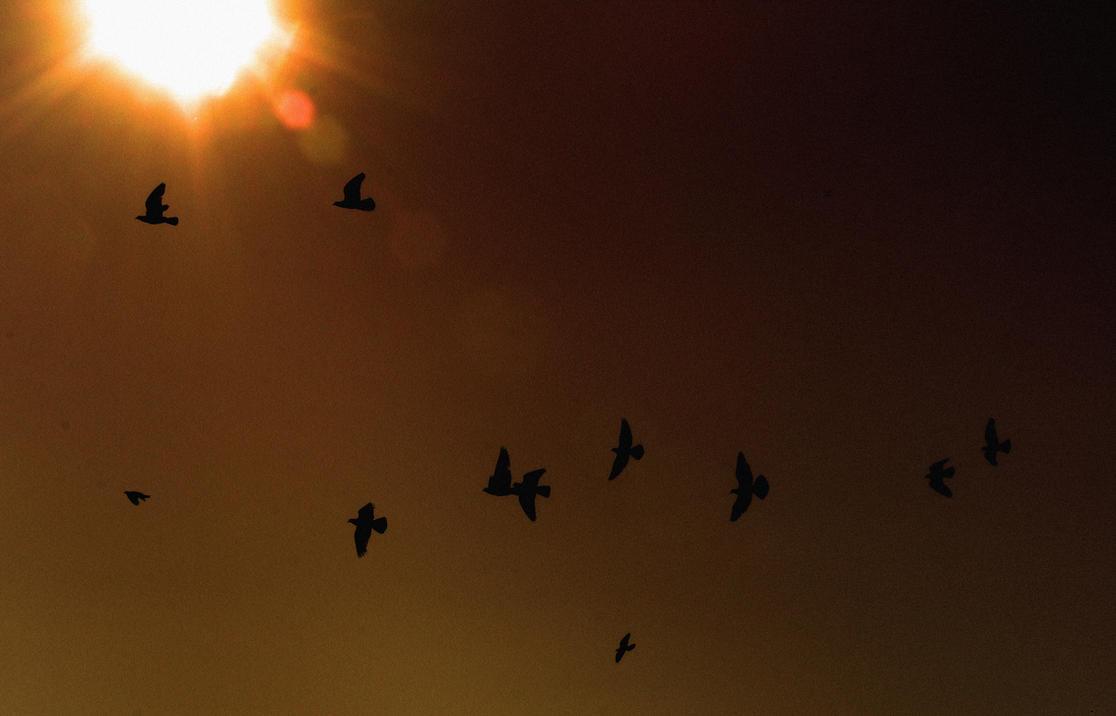A Flock Of Seagulls by darthbriboy