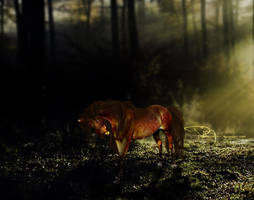 Follow The Wolves by Moral-Imbecile
