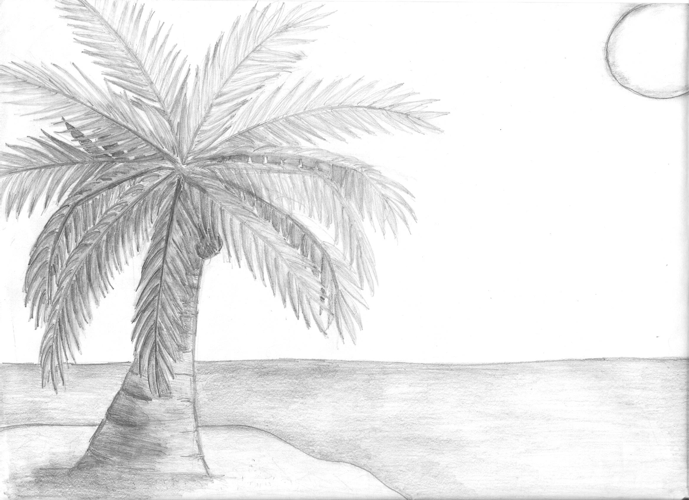 palm tree with coconuts drawing - photo #8