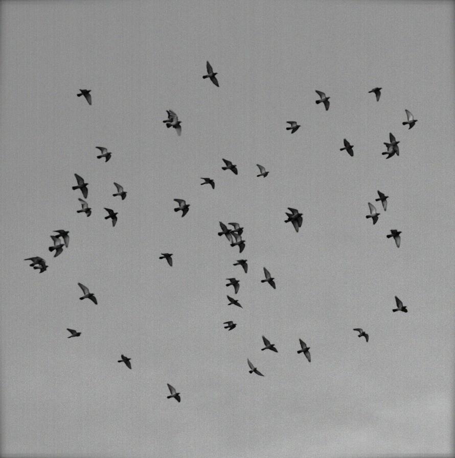 Bird Pattern by Jupis