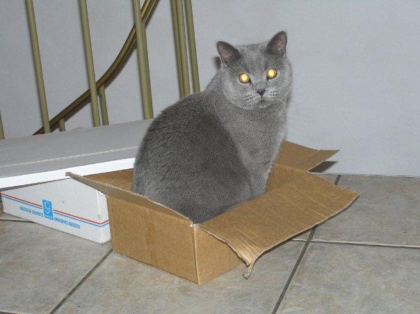 A classic: A cat in a box. by Goldie4224