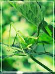 Grass Hoppa by amelie89