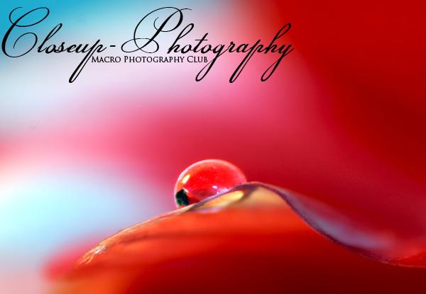 Closeup-Photograph by amelie89