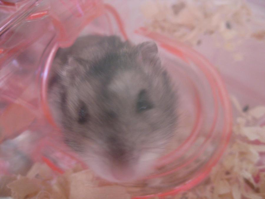 aisemicr's Profile Picture