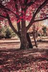 Dem-dere-trees-1