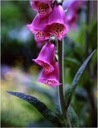flower by marecki