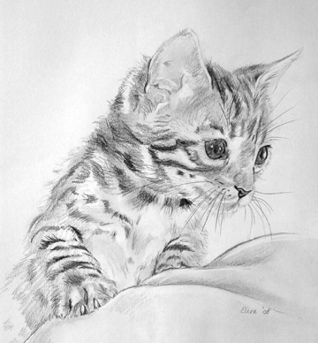 Sketches Of Cute Kittens Wwwimgarcadecom Online