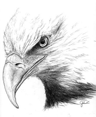 Eagle's head by smiles12345 on DeviantArt