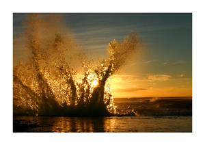 A Splash of Gold
